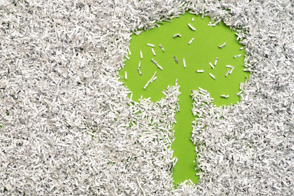 Les arbres sont-ils importants pour la fabrication des papiers?